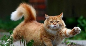 Beautiful-Cat-cats-16096437-1280-8001.jpg