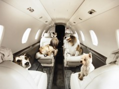 pets-on-jets-for-press_original1.jpg