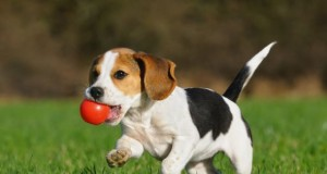 small-dog-playing1.jpg