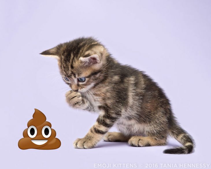 Emoji_Kittens_Tania_Hennessy_poop_2016_Tania_Hennessy-5789ee7f1e194__880 (1)
