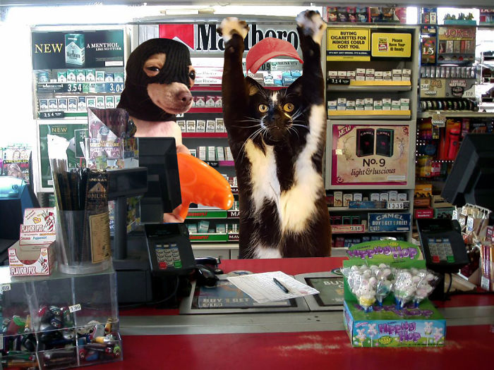 Store-clerk-kitty-is-having-a-bad-day-57a12345dddb4__700