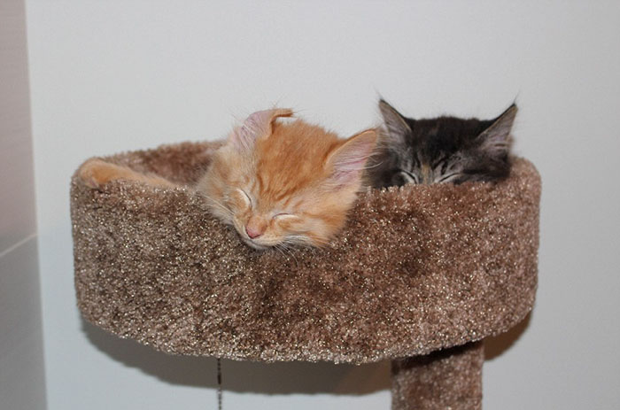 cats-sleeping-together-before-after-growing-up-renley-lili-4