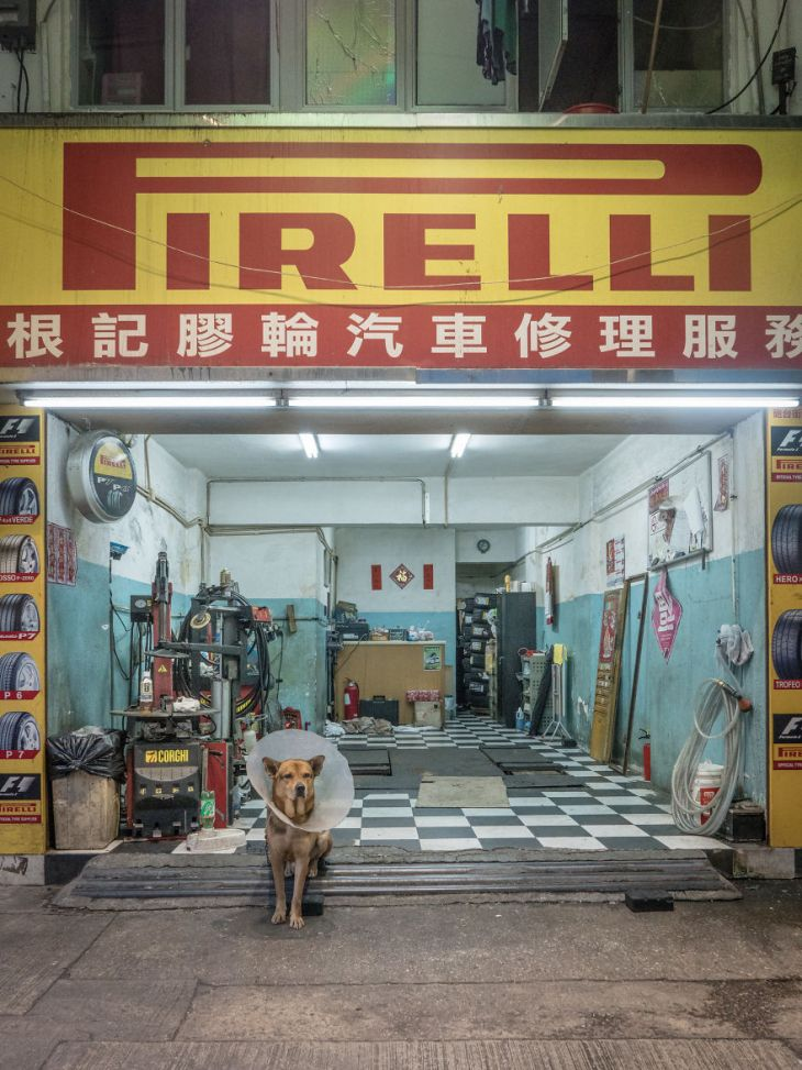 Photographer-does-a-brilliant-project-on-the-dogs-guarding-the-auto-thieves-workshops-in-Hong-Kong-5be934decd853__880