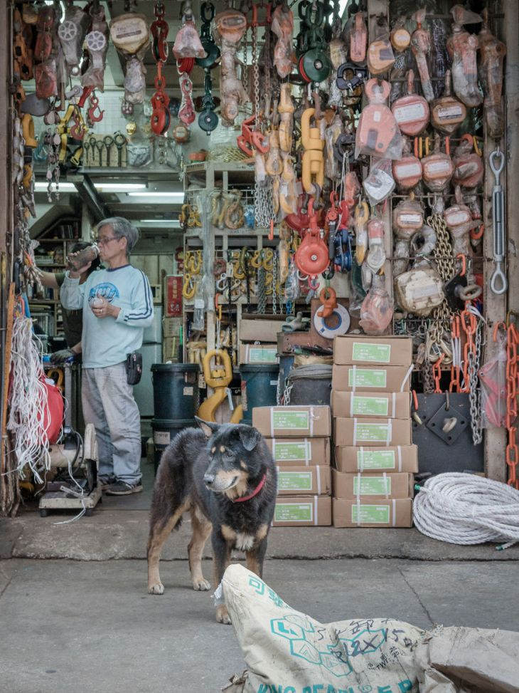 Photographer-does-a-brilliant-project-on-the-dogs-guarding-the-auto-thieves-workshops-in-Hong-Kong-5be934f2546f2__880