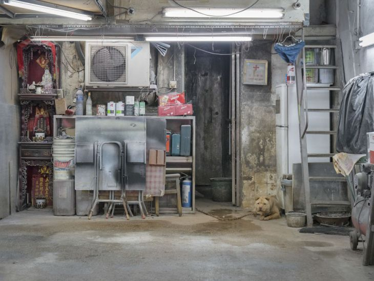 Photographer-does-a-brilliant-project-on-the-dogs-guarding-the-auto-thieves-workshops-in-Hong-Kong-5be934f8edf14__880